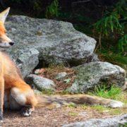 Para Android e iPhone: Firefox Focus bloqueia anúncios irritantes e protege a privacidade