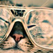 Google Fotos agora agrupa fotos de cachorro ou gato