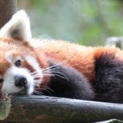 Quantum, nova versão do Firefox, é um dos navegadores mais rápidos do mercado