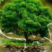 6 apps que ajudam a diminuir o impacto no meio ambiente