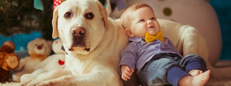 Dicas profissionais para capturar os melhores cliques dos animais de estimação
