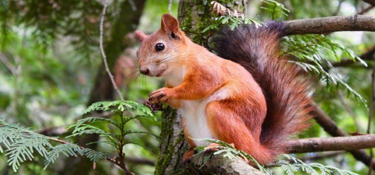 Bug do esquilo: Pegadinha que trava o WhatsApp viraliza no aplicativo