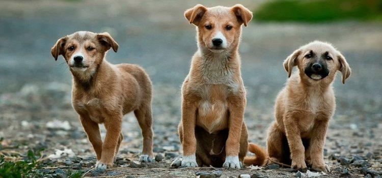 #WhatTheFluffChallenge: o desafio que está confundindo cães e gatos na internet