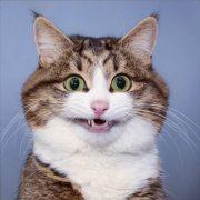 Dia Mundial do Gato: 45 perfis de gatos famosos para seguir no Instagram