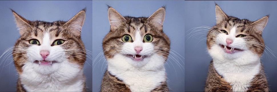 Dia Nacional dos Animais: conheça os gatos mais famosos do Instagram