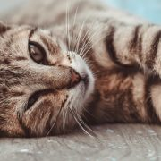 Baidu desenvolve casa inteligente para gatos de rua